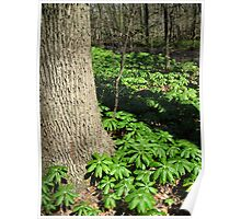 Tree and Spring Foliage Poster