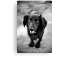 happy and funny Canvas Print