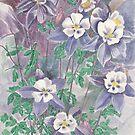 Flowers of Aquilegia by acquart