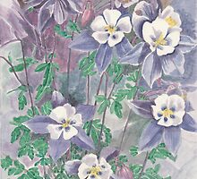 Flowers of Aquilegia by acquart