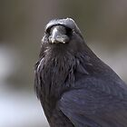 Grizzled Raven (1) by JamesA1