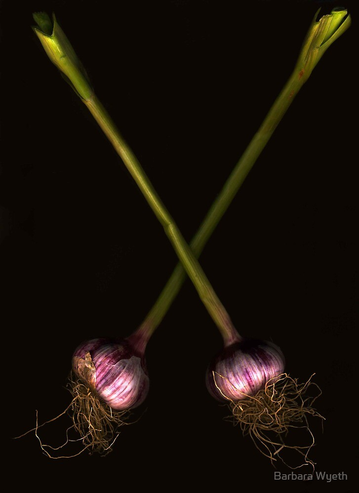 Fresh Garlic by Barbara Wyeth