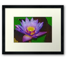 Water lily with molten center Framed Print