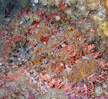 Raggy Scorpionfish (Scorpaenopsis venosa) by Elsa Dyason