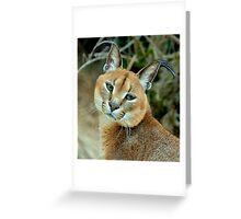 The bird watcher (Felis Caracal) Greeting Card