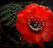 The Color Red Always Makes Me Smile... by Saija  Lehtonen