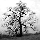 a great old tree by Jean Gregory  Evans