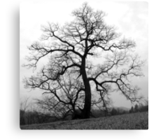 a great old tree Canvas Print