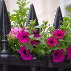 Fence & Flowers by vbk70