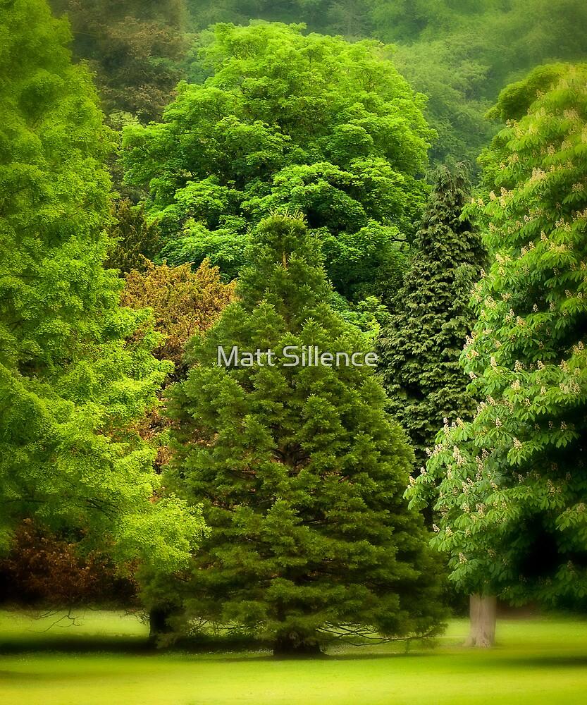 Blooming good Trees by Matt Sillence