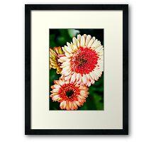 Flowers in the garden Framed Print
