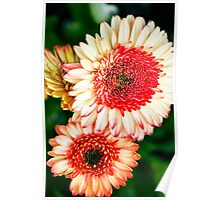 Flowers in the garden Poster