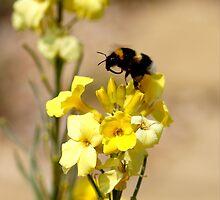 Yumm pollen tastes good.. by Joyce Knorz
