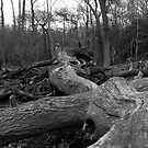 Ex Trees by funkybunch