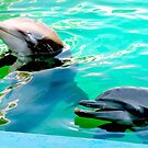 Dolphins at the aquarium by  B. Randi Bailey
