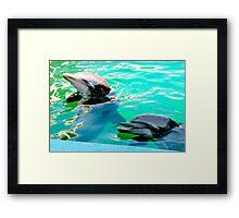 Dolphins at the aquarium Framed Print