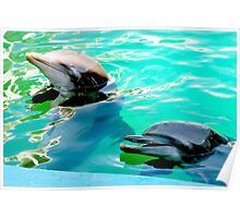 Dolphins at the aquarium Poster