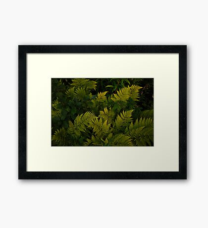 On a Forest Floor  Framed Print