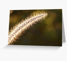 Backlit grasses by the sea Greeting Card