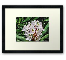 Rosebay Rhododendron - Smoky Mountains Framed Print