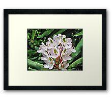 Rosebay Rhododendron - Smoky Mountains Framed Print