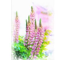 Lupin Digital Painting Photographic Print