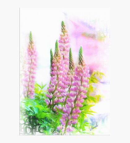Lupin Digital Painting Photographic Print