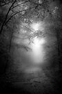 A Path through the Woods by Mary Ann Reilly
