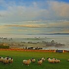 Foggy morning at Broughshane.  by Fred Taylor