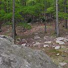 Woods near Lake Skannatati I by Sinclere