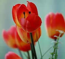 Tulips... only fake. by tantricpark182