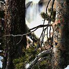 Through The Pines by Kay Kempton Raade