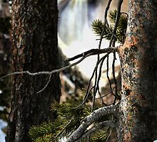 Through The Pines by Kay Kempton Raade