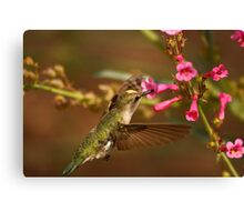Humming Bird. Canvas Print