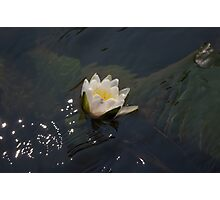 Water Lily - Cloquet River Photographic Print