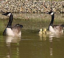 Its a family affair by Larry Baker
