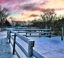 Winter Fence by Carolyn Kamuda