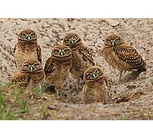 6 baby owls Photographic Print