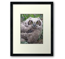 first born first retrieval Framed Print