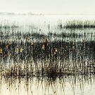 Canneti, Lago Trasimeno, Umbria. Italy by Andrew Jones