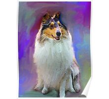Blue Merle Collie Poster