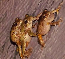Piggy Back (smile) and Leap Frog by Charldia