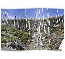 forgotten forest Poster
