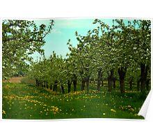 May Blossoms bring fruit................ Poster