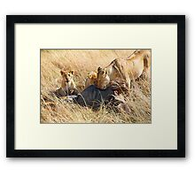 Lioness  & her Cubs at a Wildebeest Kill, Maasai Mara, Kenya Framed Print