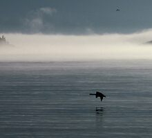 Lake Superior Fog and Canada Goose - Marathon Ontario Canada by loralea