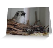 Grey Shrike Thrush on Nest Greeting Card