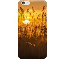 Sunset Golden Reeds iPhone Case/Skin