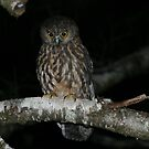 Morepork Knobs Flat New Zealand by tiliqua