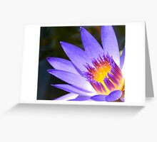 Burst of Color Close-Up (water lily) Greeting Card